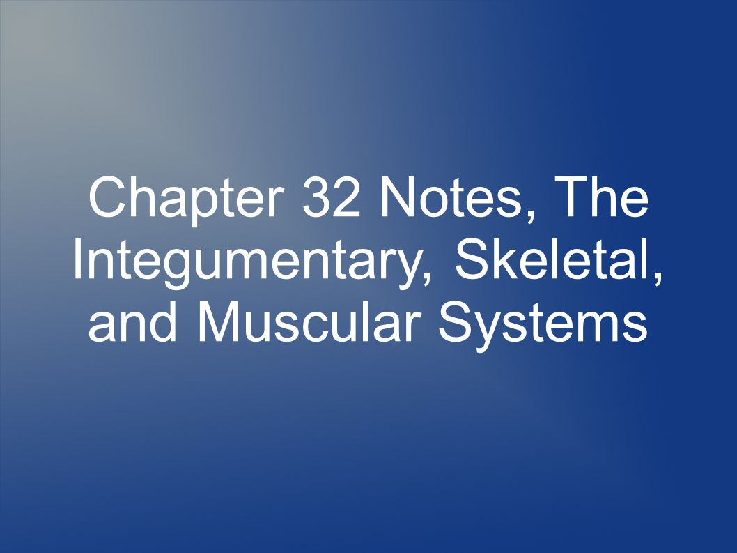 anatomy chapter 14 notes Human anatomy and physiology i a/p-a web site fo r human anatomy and physiology november 14-lecture exam chapters 3 and 4 chapter 14 and chapter.