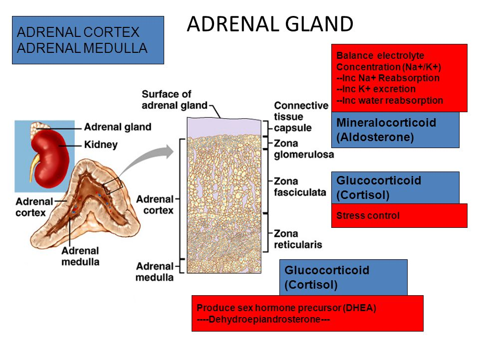 Endocrine System Review Ppt Video Online Download