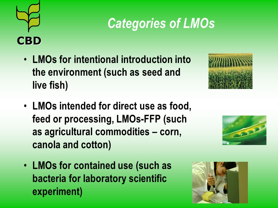 Categories of LMOs CBD. LMOs for intentional introduction into the environment (such as seed and live fish)