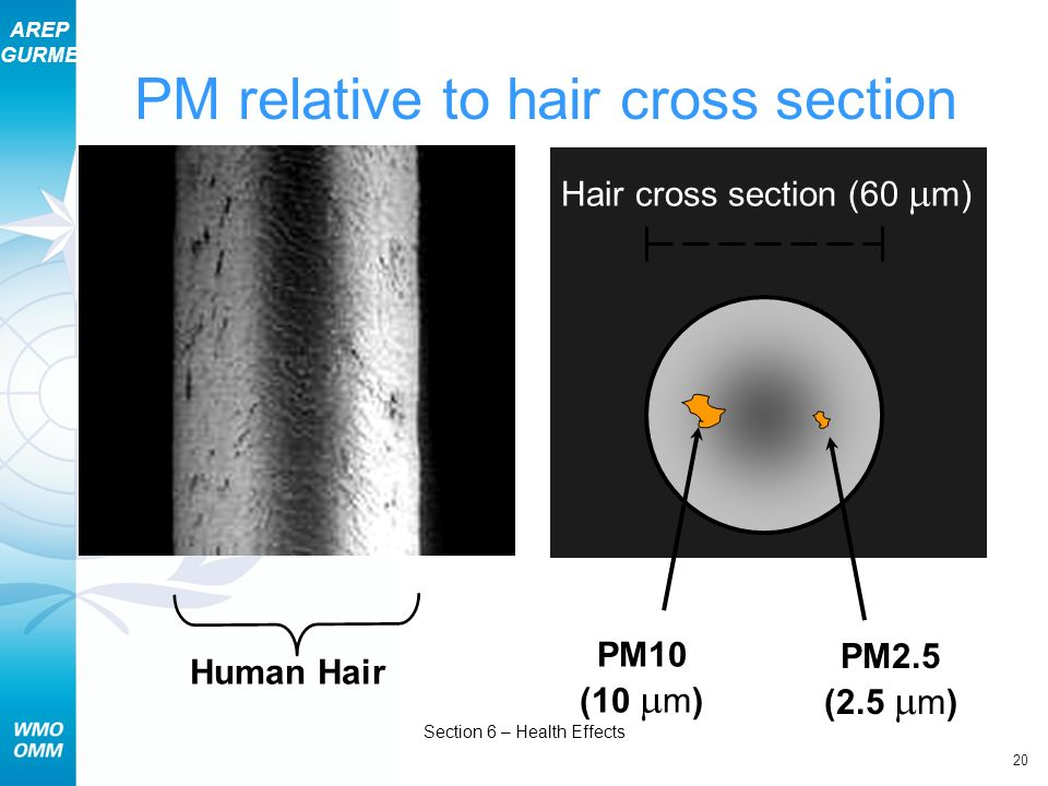 PM relative to hair cross section