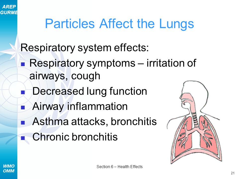 Particles Affect the Lungs