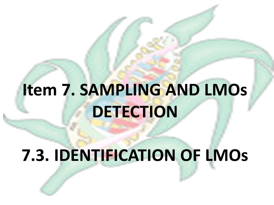Item 7. SAMPLING AND LMOs DETECTION 7.3. IDENTIFICATION OF LMOs