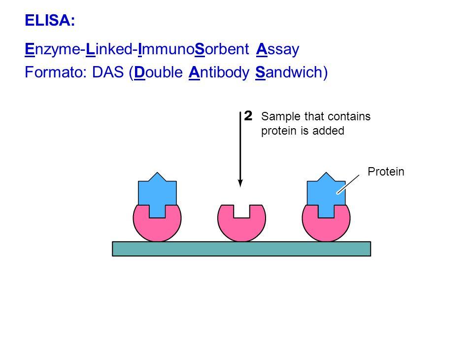Enzyme-Linked-ImmunoSorbent Assay