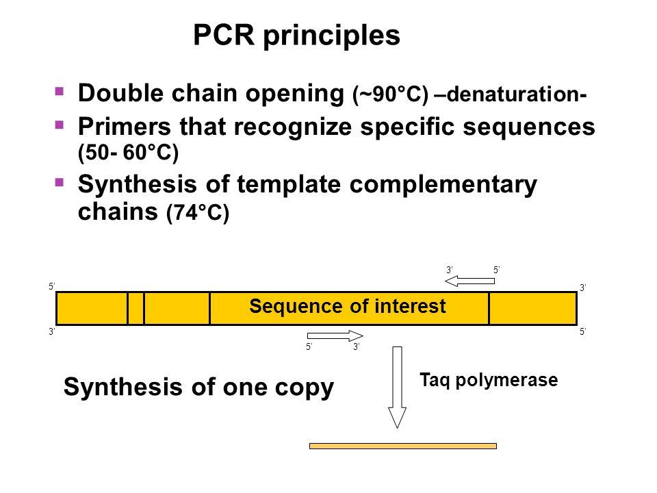PCR principles Double chain opening (~90°C) –denaturation-