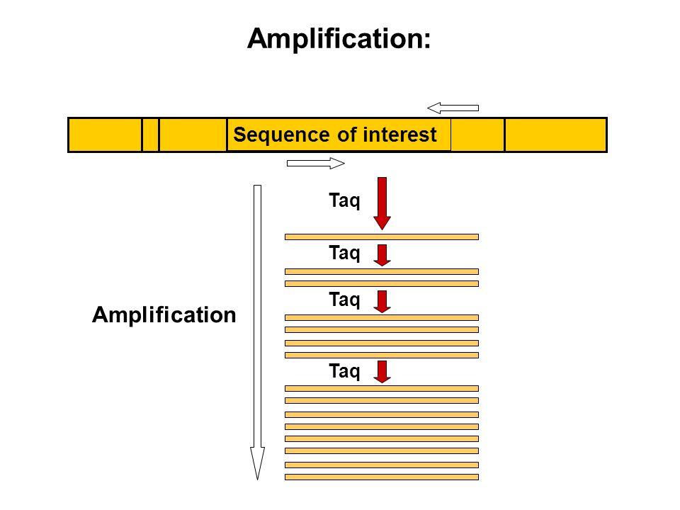 Amplification: Amplification Sequence of interest Taq Taq Taq Taq