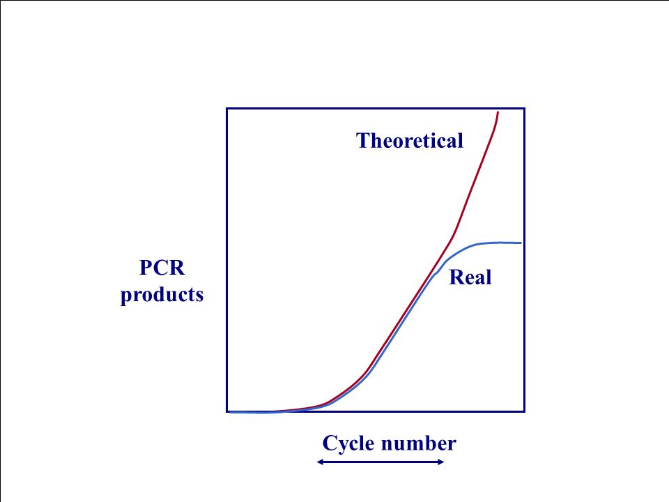 Cycle number PCR products Theoretical Real