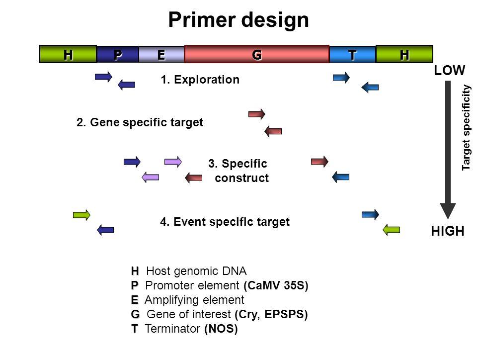 Primer design P E H G T LOW HIGH 1. Exploration
