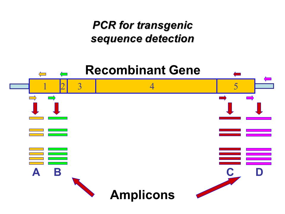 Recombinant Gene Amplicons PCR for transgenic sequence detection A B C