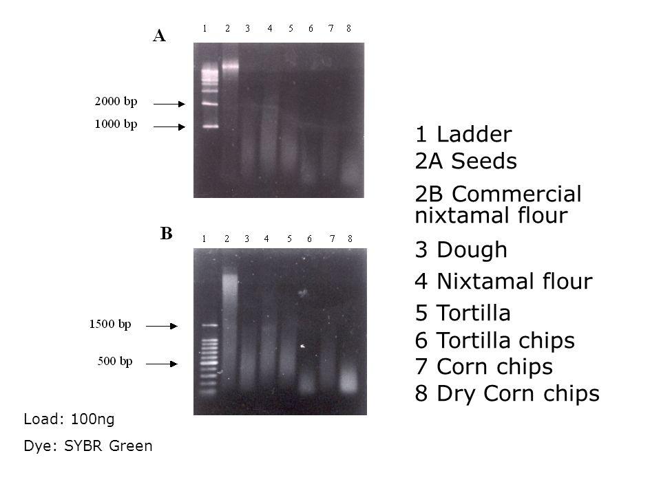 1 Ladder 2A Seeds. 2B Commercial nixtamal flour. 3 Dough. 4 Nixtamal flour. 5 Tortilla. 6 Tortilla chips.