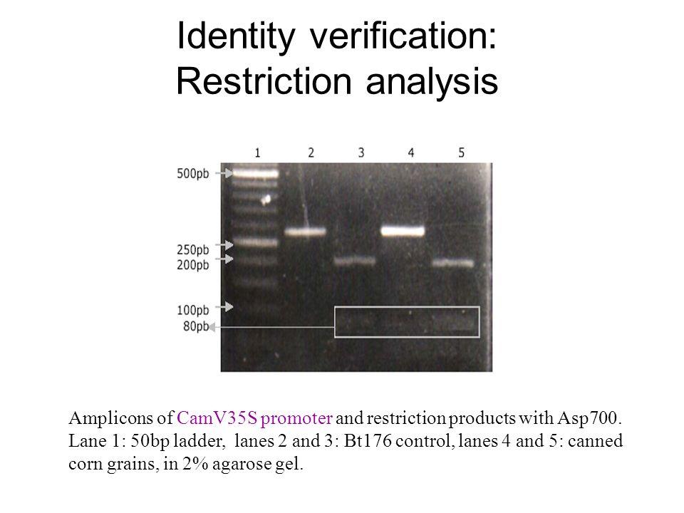 Identity verification: