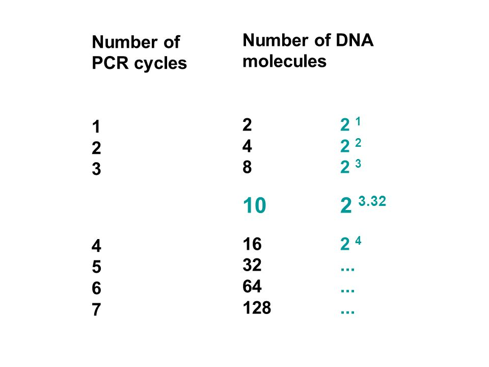 10 2 3.32 Number of DNA molecules Number of PCR cycles 2 2 1 1 4 2 2 2