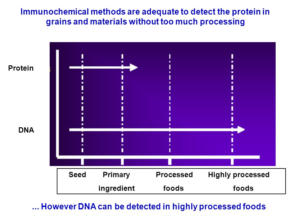 ... However DNA can be detected in highly processed foods