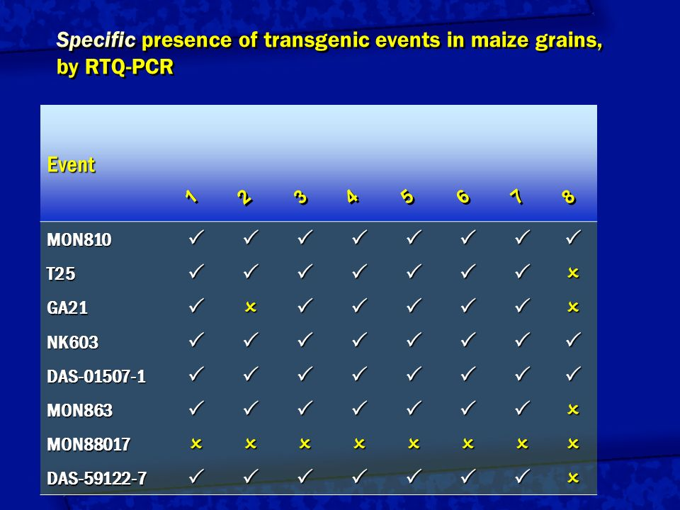 Specific presence of transgenic events in maize grains, by RTQ-PCR