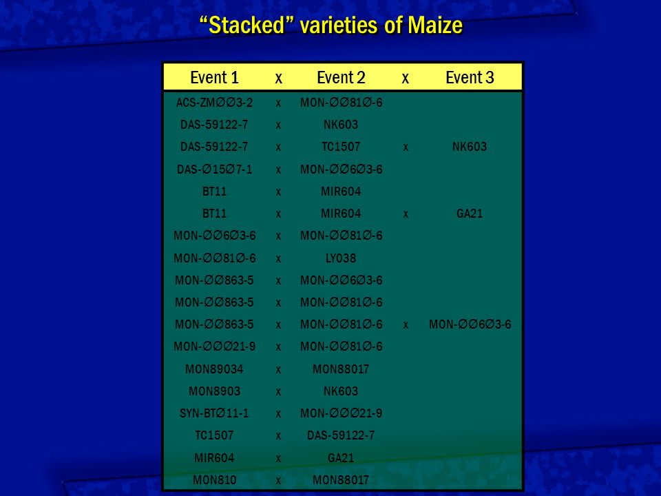 Stacked varieties of Maize