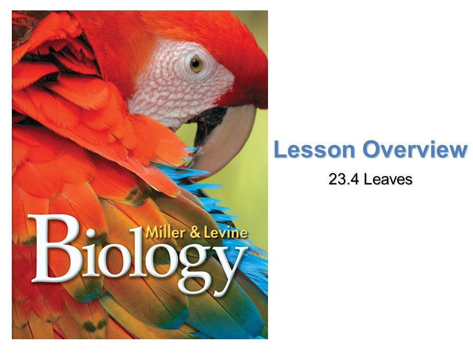 Lesson Overview 23.4 Leaves