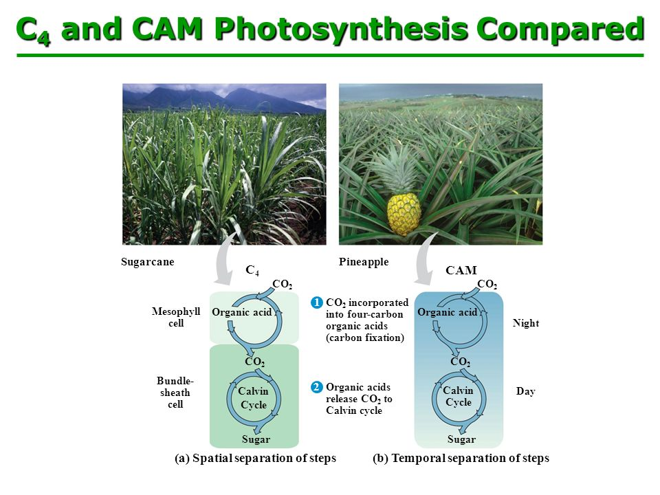 design a scientific experiment to determine the effect of the variable on the rate of photosynthesis We will write a custom essay sample on to investigate the effect of carbon dioxide concentration on the rate of photosynthesis specifically for you for only $1638 $139/page order now.