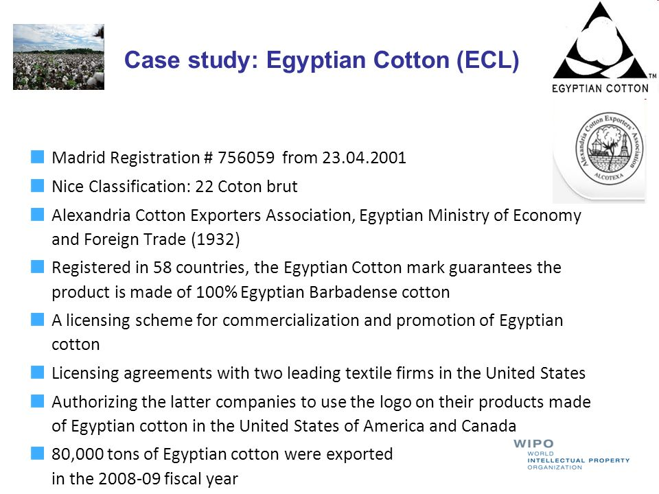 Case study: Egyptian Cotton (ECL)