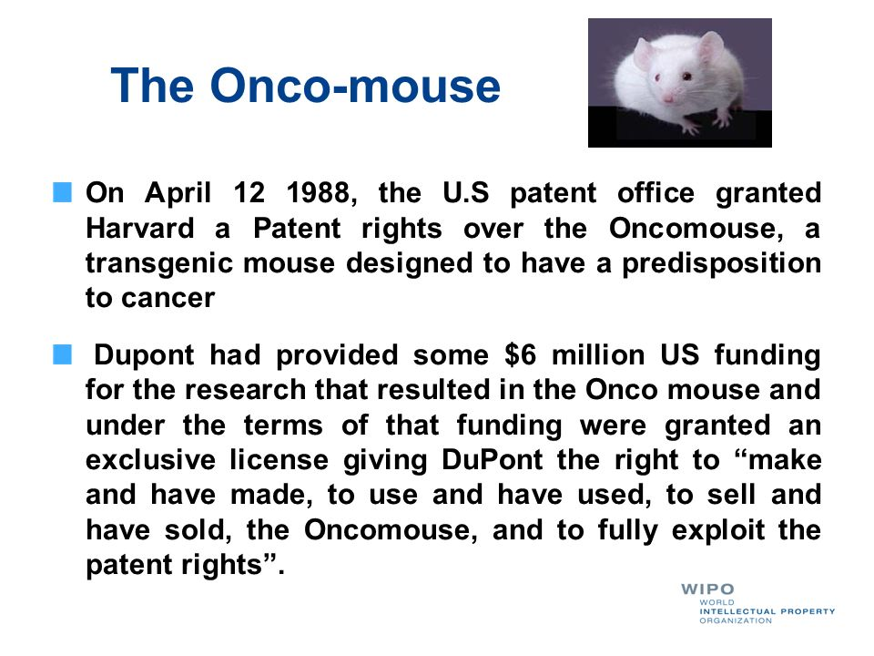 The Onco-mouse