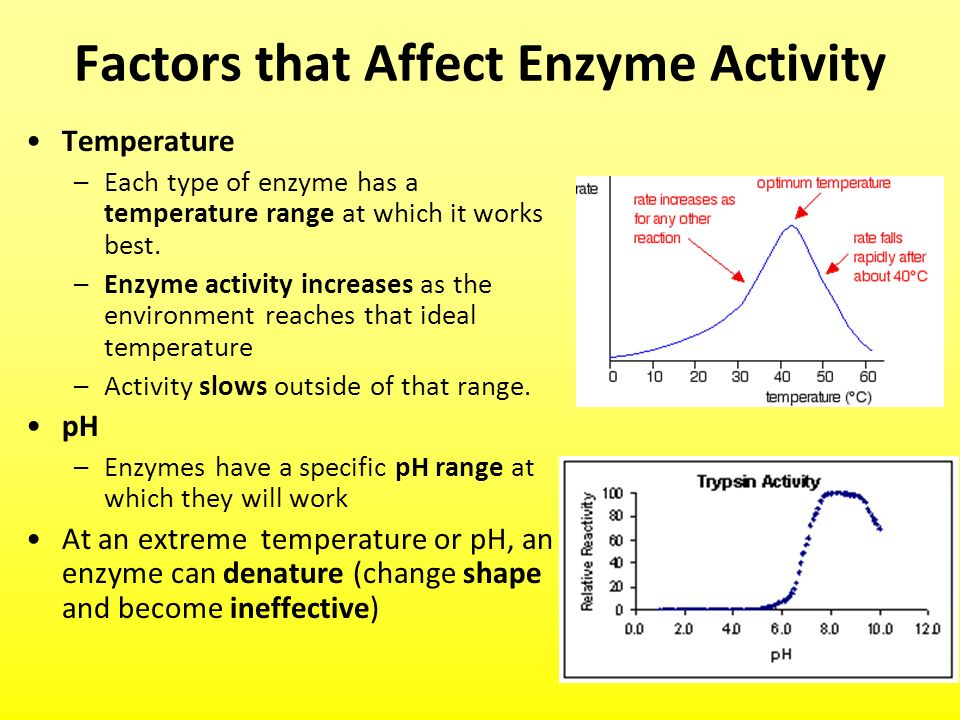 temperature affecting enzyme activity Category: papers title: the effect of temperature on enzyme activity.