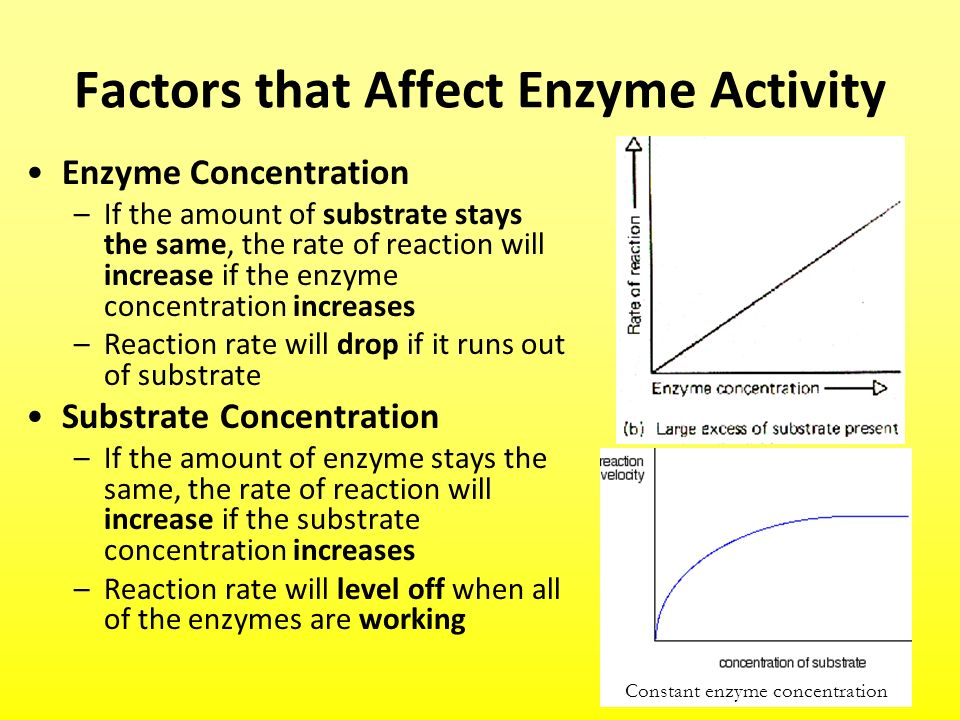 factors that affect enzyme reaction rate Several factors affect the rate at which chemical reactions proceed understanding them can help you predict the direction and speed of a chemical reaction.