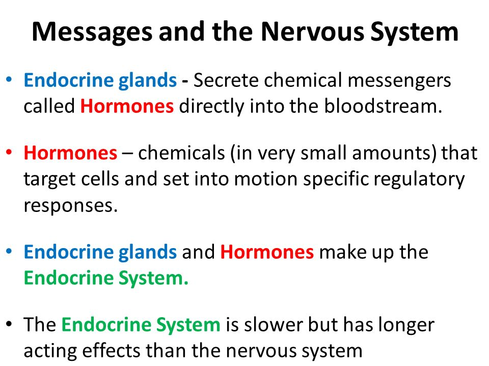 Messages and the Nervous System