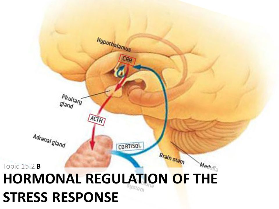 Hormonal Regulation of the Stress Response