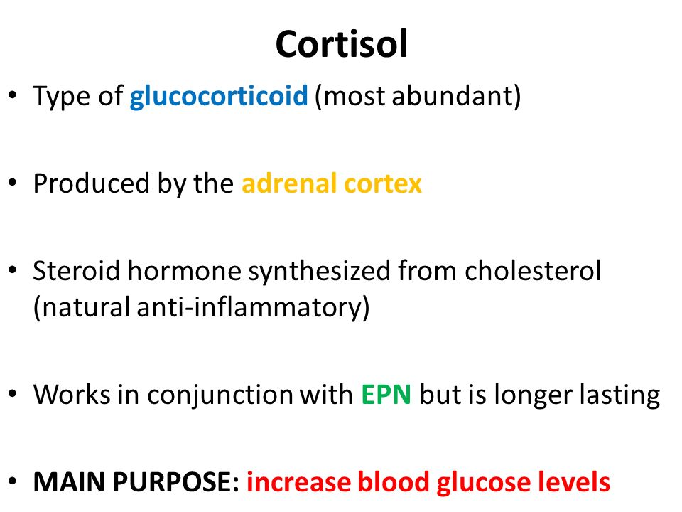 Cortisol Type of glucocorticoid (most abundant)