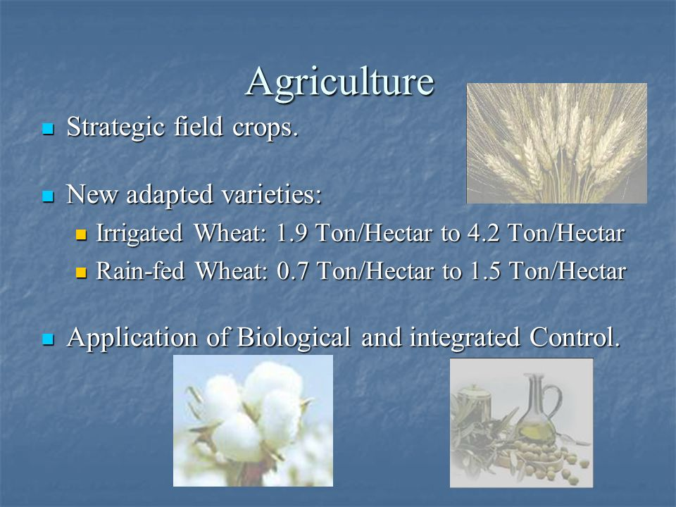 Agriculture Strategic field crops. New adapted varieties: