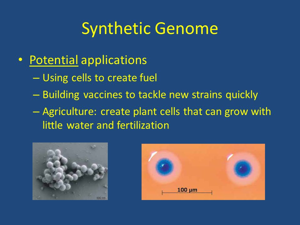 Synthetic Genome Potential applications Using cells to create fuel