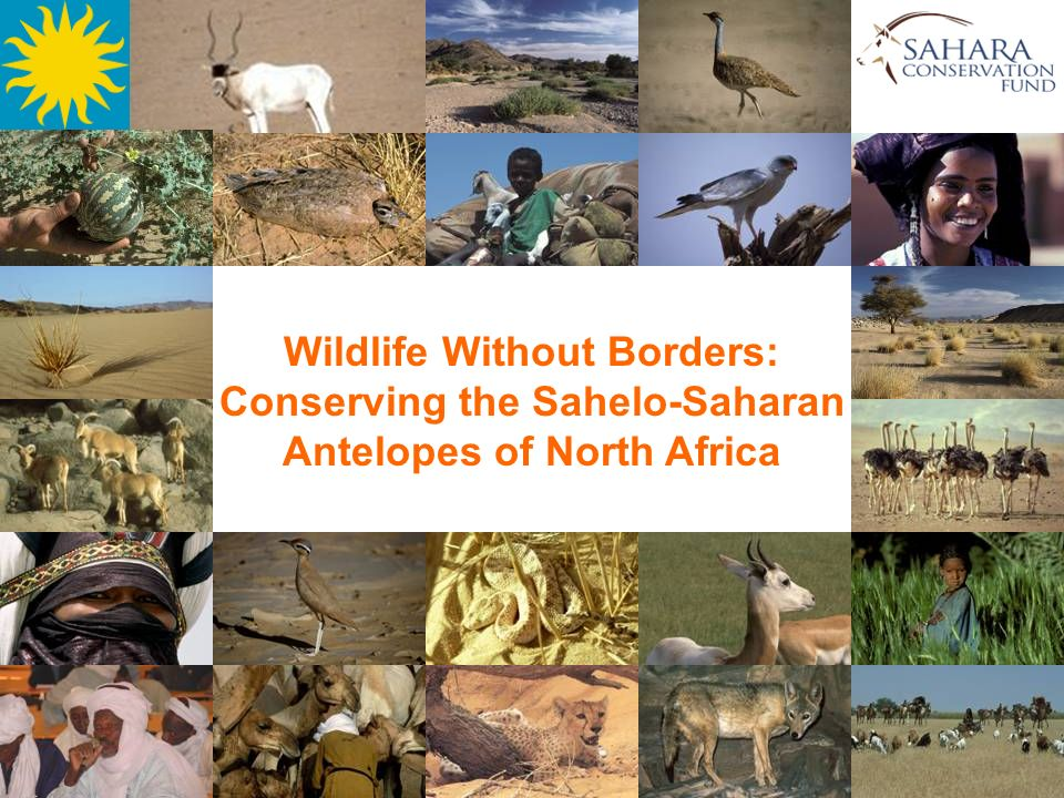 Wildlife Without Borders:
