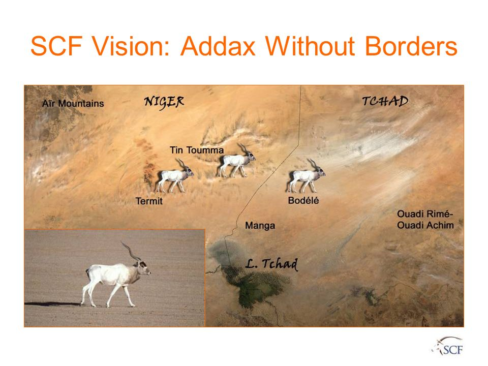 SCF Vision: Addax Without Borders