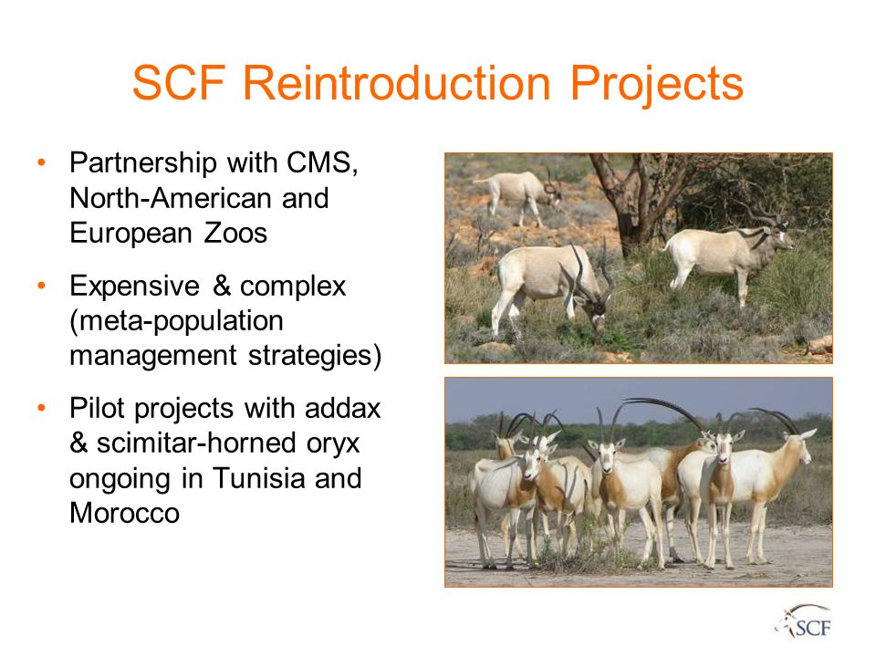 SCF Reintroduction Projects
