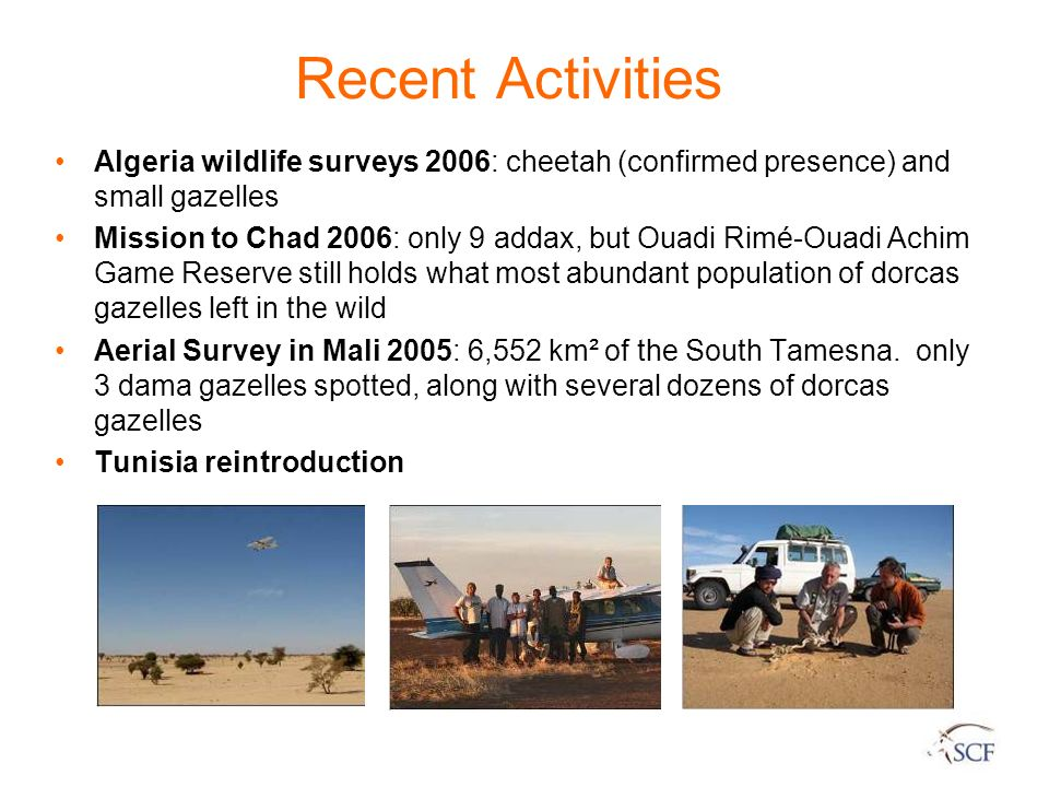 Recent Activities Algeria wildlife surveys 2006: cheetah (confirmed presence) and small gazelles.