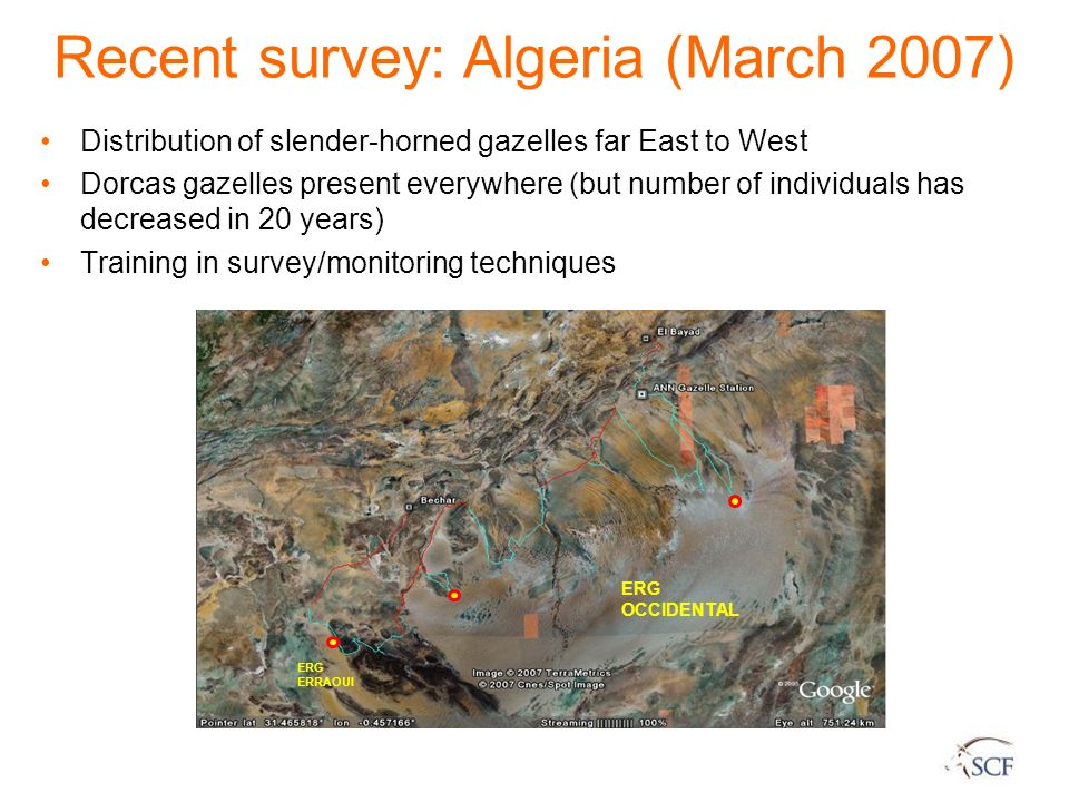 Recent survey: Algeria (March 2007)