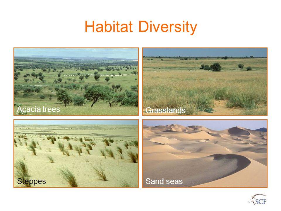Habitat Diversity Acacia trees Grasslands Steppes Sand seas