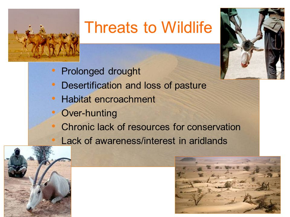 Threats to Wildlife Prolonged drought