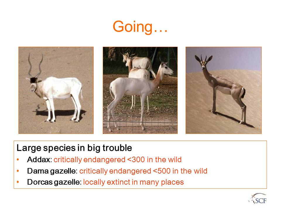 Going… Large species in big trouble