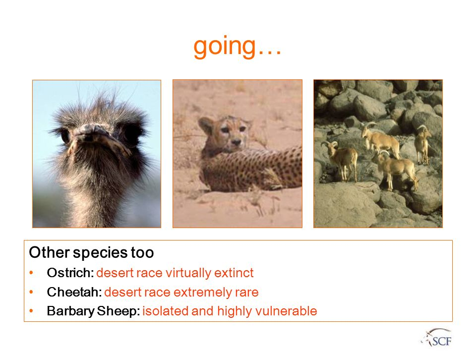 going… Other species too Ostrich: desert race virtually extinct