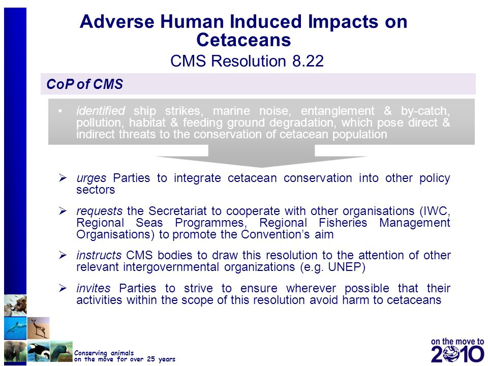 Adverse Human Induced Impacts on Cetaceans CMS Resolution 8.22