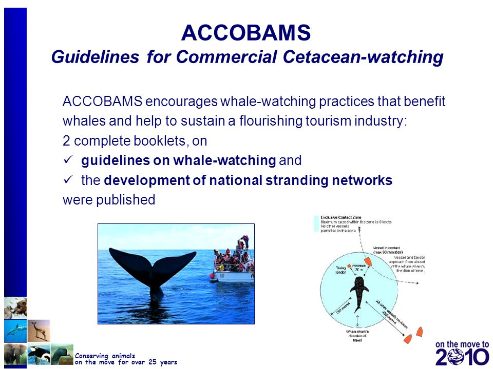 ACCOBAMS Guidelines for Commercial Cetacean-watching