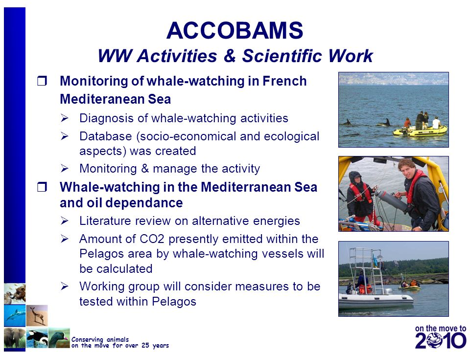 ACCOBAMS WW Activities & Scientific Work