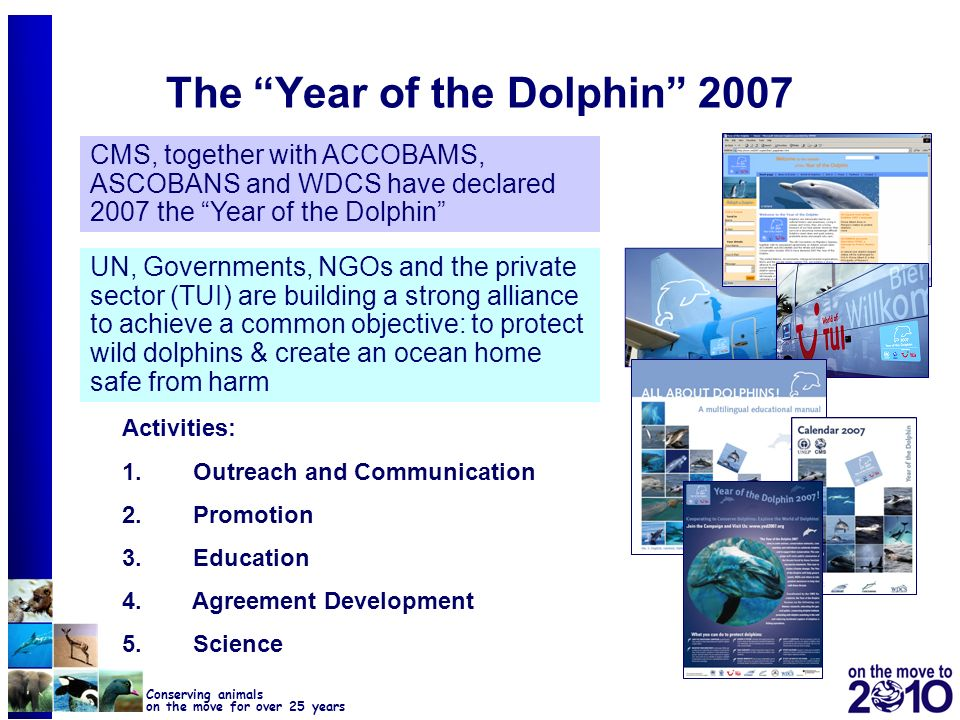 The Year of the Dolphin 2007