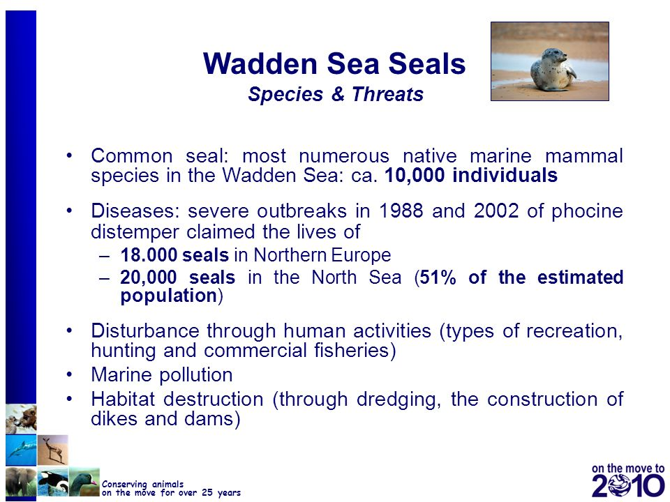 Wadden Sea Seals Species & Threats