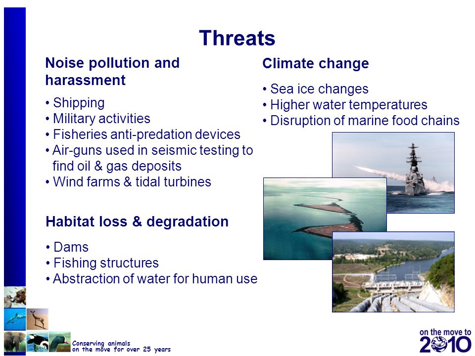 Threats Noise pollution and harassment Climate change