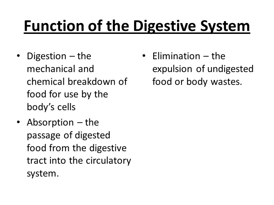 the function and mechanics of the digestive system essay