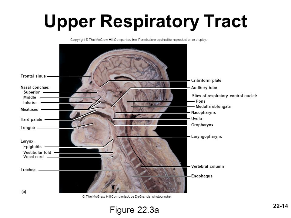 upper tract dating site Gastrointestinal tract infections 20  to elude the host defenses of the upper gastrointestinal tract and reach the intestine (fig 203 see also chapter 7.