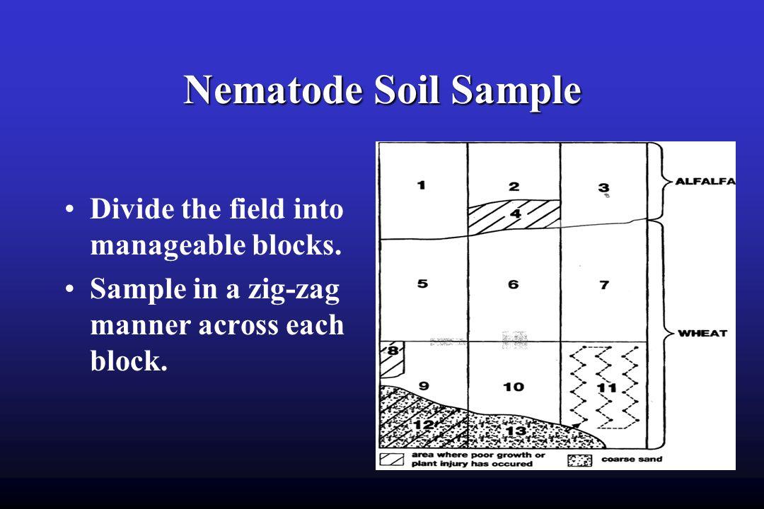 Management of the Reniform Nematode in Cotton - ppt download