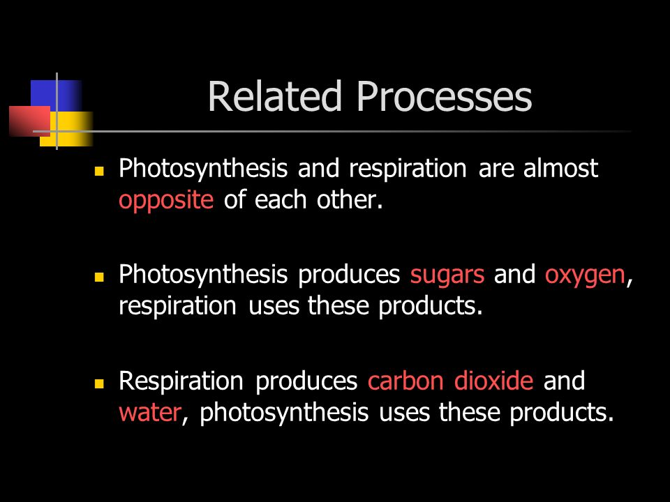 Related Processes Photosynthesis and respiration are almost opposite of each other.
