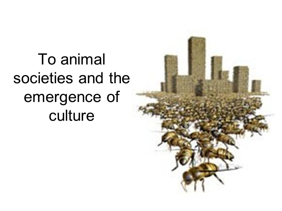 To animal societies and the emergence of culture