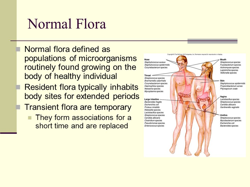 Normal Flora Normal Flora Defined As Populations Of Microorganisms  Routinely Found Growing On The Body Of